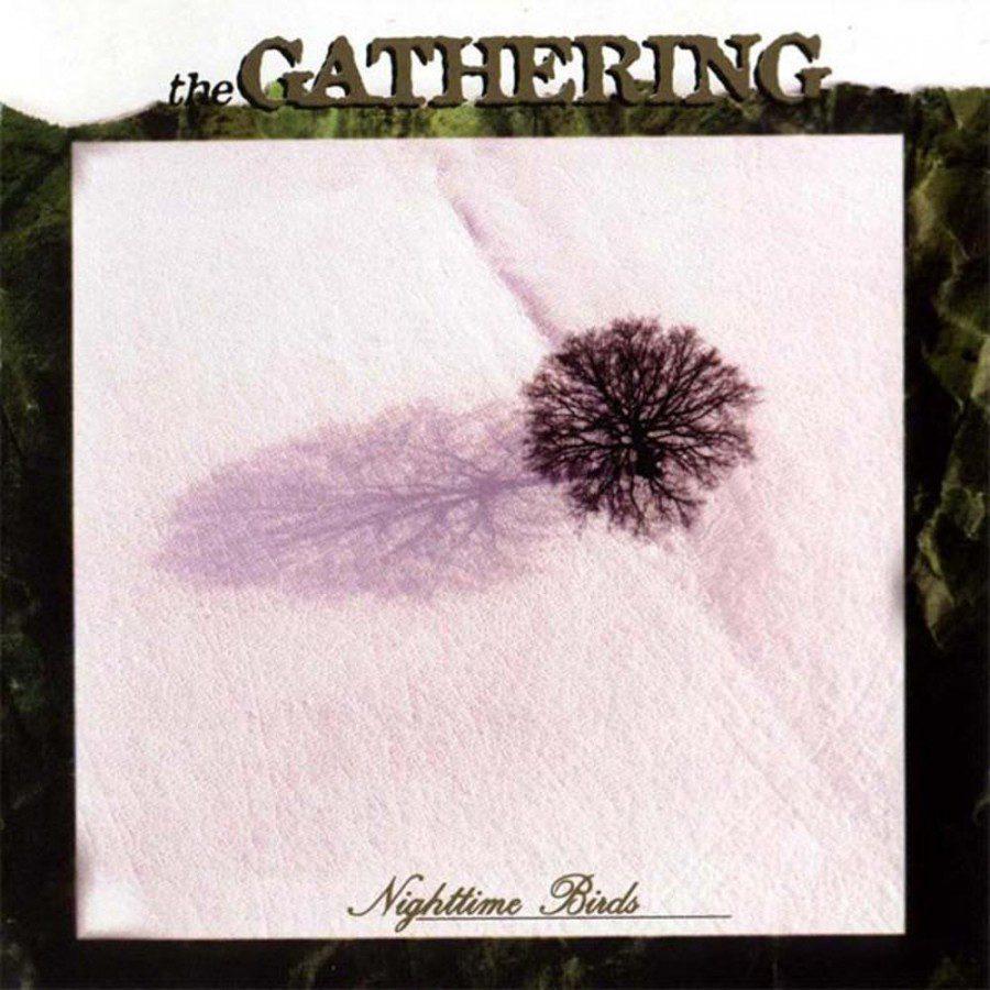 gathering_nighttime_birds